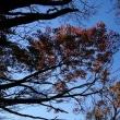 英彦山の秋