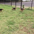 3 young dogs 揃っての シエンタ 初乗り♪