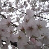 ヨット部的飲み会で「琵琶湖就航の歌」