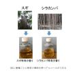 女子大生が造ったお酒?森林総研発表の「木のアルコール」です!