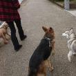朝の散歩でルポに会う!