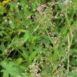 成東 食虫植物自生地とアケボノシュスラン自生地
