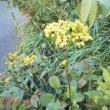 屋上の花1