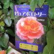 Autumn Rose Garden    オータム ローズ ガーデン