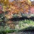2017-12-07 今日の記録  都立野川公園自然観察園で紅葉を楽しむ