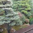 1287 「金沢、成巽閣の秋庭」