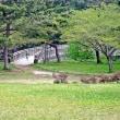 野木和公園のヤマザクラ