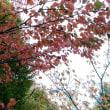 秋のご近所散歩