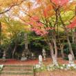 圓通寺の紅葉