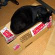 箱の使い方。