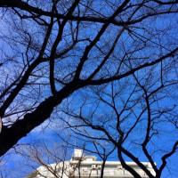 穏やかな青空の2018年大晦日🤗