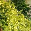 我が家の♫庭花・・爽やかに。。 (^_-)-☆