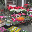 華やかな花屋さん