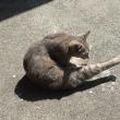 猫のいるパワースポット『榛名神社(群馬)』