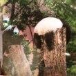 上野の森のシャンシャン日記 ~生後470日 ⑤祝・命名1年&プレミアムツアー