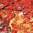 京都嵐山の紅葉 2017年