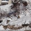 志賀高原へ スキー旅行 4日目