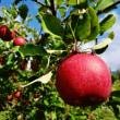 越後の秘境「秋山郷」とリンゴ狩りへ
