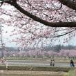 田園の桜並木。