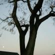 <大きな木から落ちる実。>