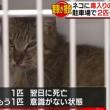 """ネコ2匹に""""毒エサ"""""""