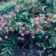 あきる野の里山で野の花教室楽しみました♥♥ 秋の贅沢!