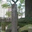 維新のふるさと鹿児島ウォーク in 2008(3)