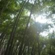 竹林が楽しみ