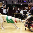 身体障害者補助(盲導・介助・聴導)犬法16年 補助犬、認知向上を 普及進まぬ理由を分析