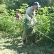 洋綿の雑草を刈り取り+昆虫のナナフシ