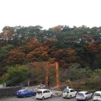 紅葉が見頃を迎えます。