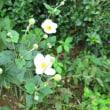 大海戸 秋の庭の花
