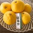 柑橘いっぱい!