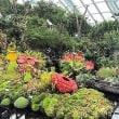 今日から12月/「シンガポール2日目植物園観光