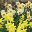 春らしくなりました