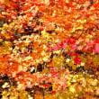 10月23日 清里周辺の紅葉