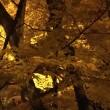 香嵐渓★紅葉