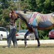 馬の見方 番外編 筋肉の役割