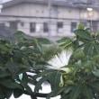 梅雨時になると咲く白い花♪沖縄の貸別荘
