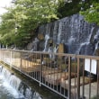 水元公園脇の釣り堀でアカエリカイツブリと出会った(123番目の出会い)