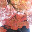京の紅葉Ⅱ