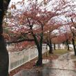 先日の雨あがり