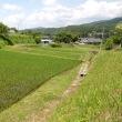 茨城県北2018年梅雨の晴れ間・・小さな棚田