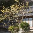 2018.02.14 伊豆長岡温泉: 古奈別荘の蝋梅