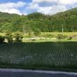 ◇6月発送◇特別栽培米◇