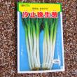 汐止晩生葱の種蒔き