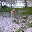 花見に行きました