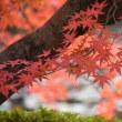 ☆京都の紅葉...♫