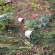 ガーデンの惨状(イノの被害) 2017年11月