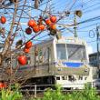 静岡鉄道は草薙駅近く 柿の木とA3004 (2018年12月)